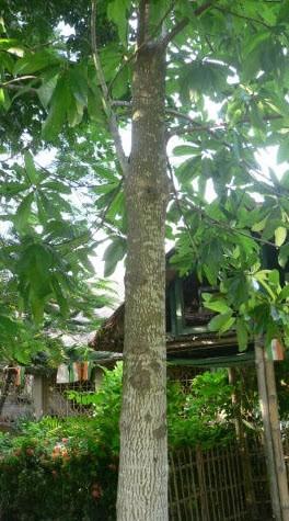 N° 133 L'arbre.jpg