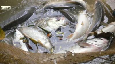 Pêche miraculeuse.jpg